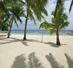 Coconut Groove_Rva5306